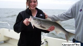 Chesapeake Bay Nice Rockfish #27