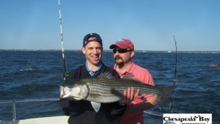 Chesapeake Bay Nice Rockfish 3 #12