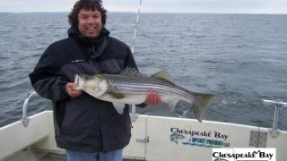 Chesapeake Bay Nice Rockfish 3 #29