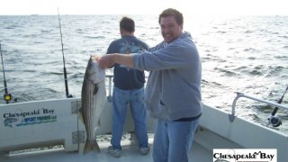 Chesapeake Bay Nice Rockfish #2