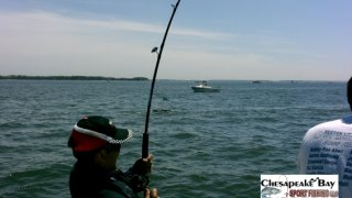 Chesapeake Bay Action Shots 2 #33