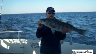 Chesapeake Bay Nice Rockfish 3 #9