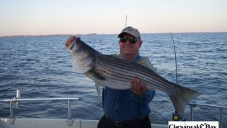 Chesapeake Bay Trophy Rockfish 4 #42