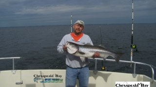 Chesapeake Bay Trophy Rockfish 4 #72