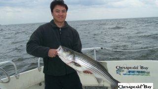 Chesapeake Bay Trophy Rockfish #11