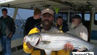 Chesapeake Bay Trophy Rockfish #15
