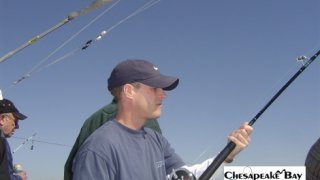 Chesapeake Bay Action Shots 2 #27