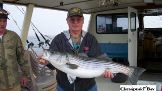 Chesapeake Bay Trophy Rockfish 2 #21