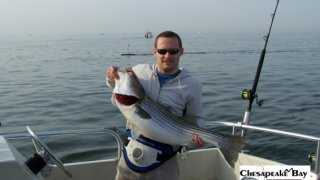 Chesapeake Bay Trophy Rockfish #28