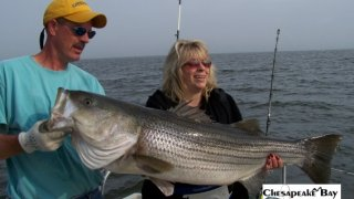 Chesapeake Bay Trophy Rockfish 2 #22
