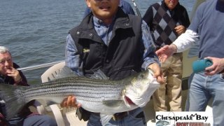 Chesapeake Bay Trophy Rockfish 2 #27