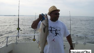 Chesapeake Bay Nice Rockfish 2 #16