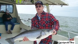 Chesapeake Bay Nice Rockfish #7