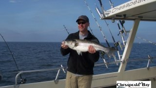 Chesapeake Bay Nice Rockfish 3 #4