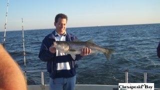 Chesapeake Bay Trophy Rockfish 4 #9