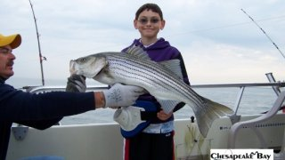 Chesapeake Bay Trophy Rockfish 3 #23