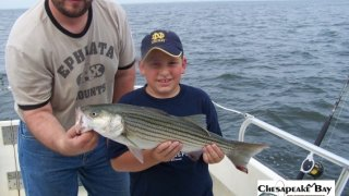 Chesapeake Bay Nice Rockfish 2 #6