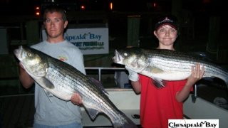 Chesapeake Bay Trophy Rockfish 4 #52