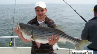 Chesapeake Bay Trophy Rockfish #32