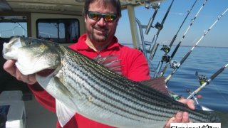 Chesapeake Bay Trophy Rockfish 4 #17