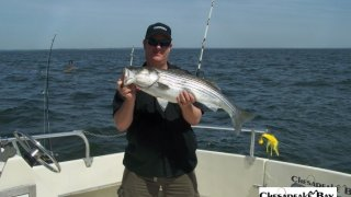 Chesapeake Bay Nice Rockfish 3 #19