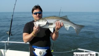 Chesapeake Bay Trophy Rockfish #20