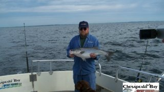 Chesapeake Bay Nice Rockfish 3 #26