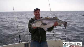 Chesapeake Bay Trophy Rockfish 4 #66