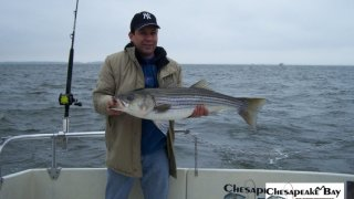 Chesapeake Bay Trophy Rockfish 3 #2