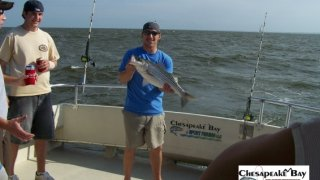 Chesapeake Bay Nice Rockfish 3 #35