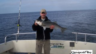 Chesapeake Bay Nice Rockfish 3 #3