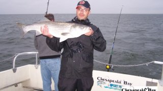 Chesapeake Bay Nice Rockfish #12