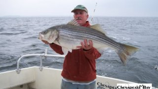 Chesapeake Bay Trophy Rockfish 4 #69