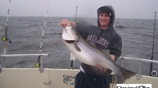 Chesapeake Bay Trophy Rockfish 4 #4
