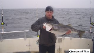 Chesapeake Bay Trophy Rockfish 4 #5
