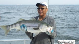 Chesapeake Bay Nice Rockfish 2 #14