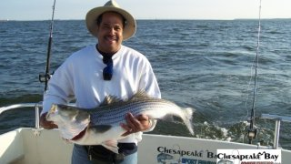 Chesapeake Bay Trophy Rockfish 3 #7