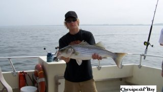 Chesapeake Bay Nice Rockfish #31