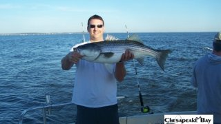 Chesapeake Bay Trophy Rockfish 4 #23