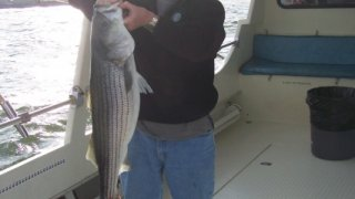 Chesapeake Bay Nice Rockfish #3