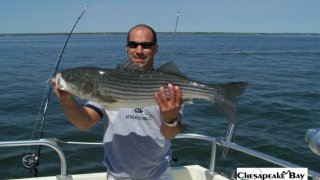 Chesapeake Bay Trophy Rockfish 2 #8