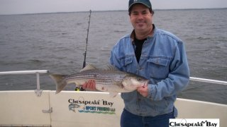 Chesapeake Bay Nice Rockfish 2 #30