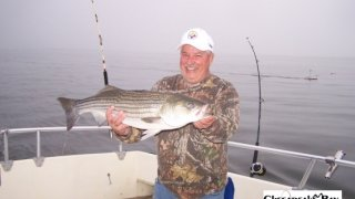 Chesapeake Bay Trophy Rockfish 4 #74