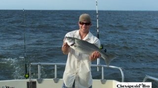 Chesapeake Bay Nice Rockfish 3 #36