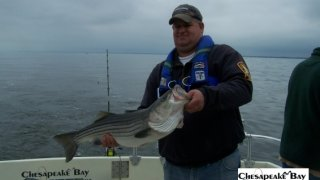 Chesapeake Bay Trophy Rockfish 4 #77