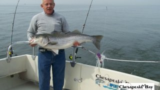Chesapeake Bay Trophy Rockfish #30