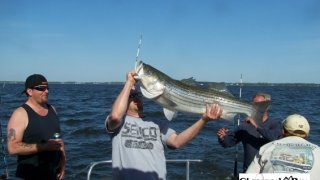 Chesapeake Bay Trophy Rockfish 3 #19