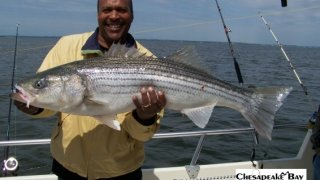 Chesapeake Bay Trophy Rockfish 2 #19