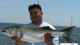 Chesapeake Bay Nice Rockfish #37
