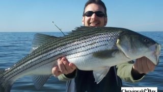 Chesapeake Bay Trophy Rockfish 4 #16